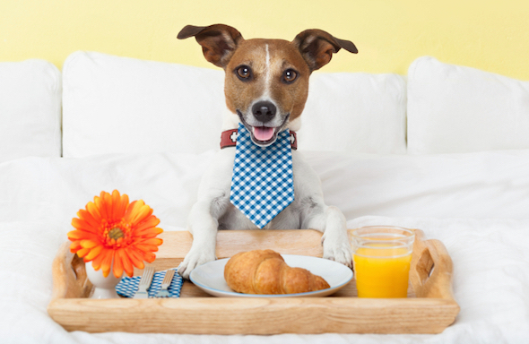 Pet Friendly Hotels Bed And Breakfast